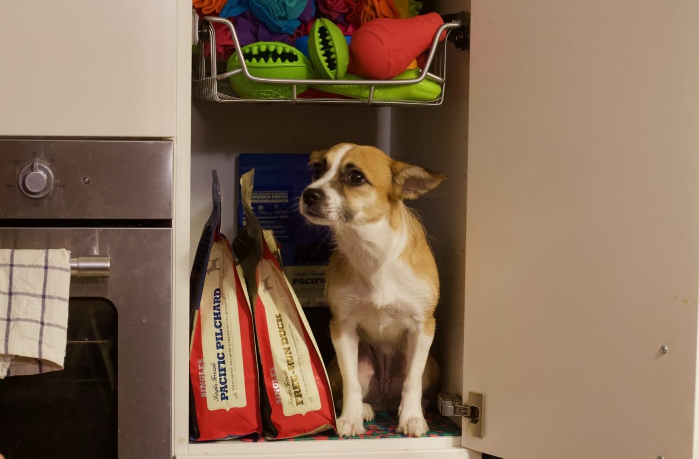 pies w szafce z karmą acana