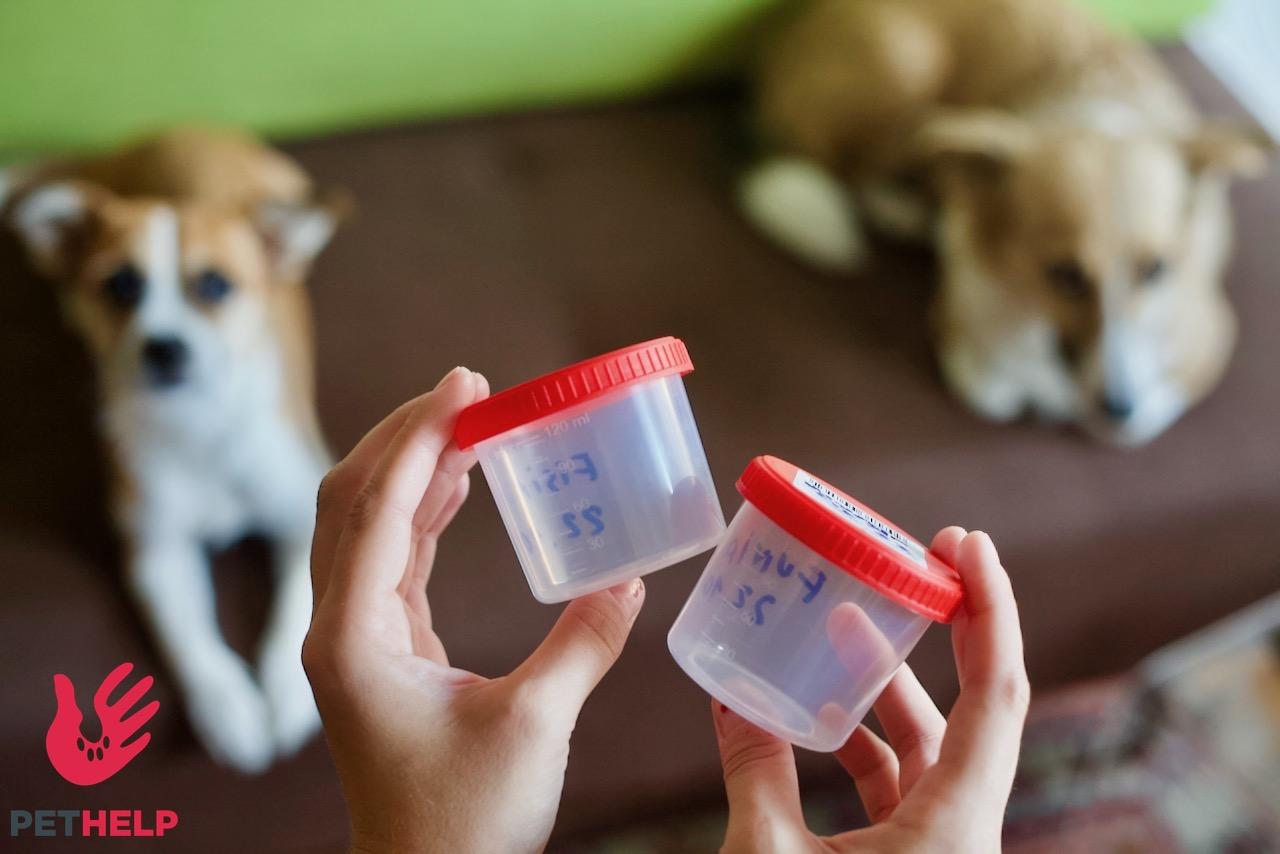 dwa psy patrzą na sterylne pojemniki służące do badania kału