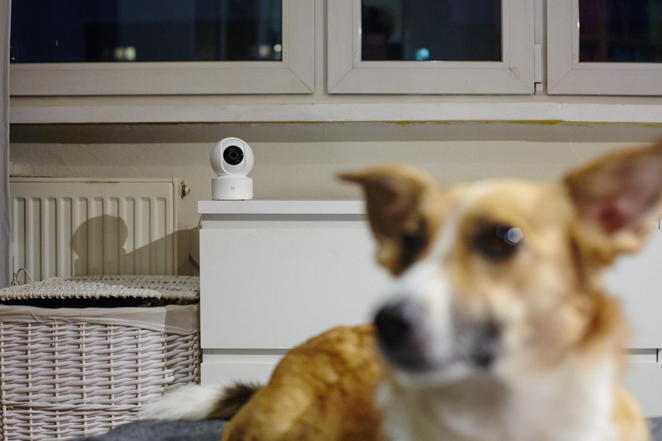 pies z nianią elektroniczną w tle