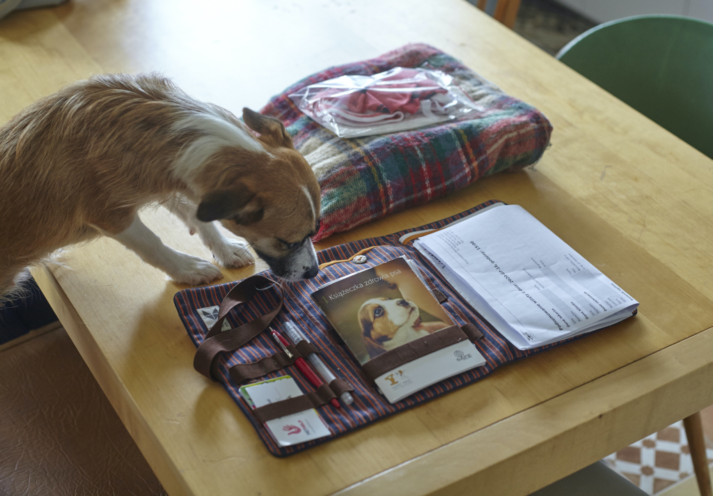 książeczka zdrowia i dokumentacja medyczna psa