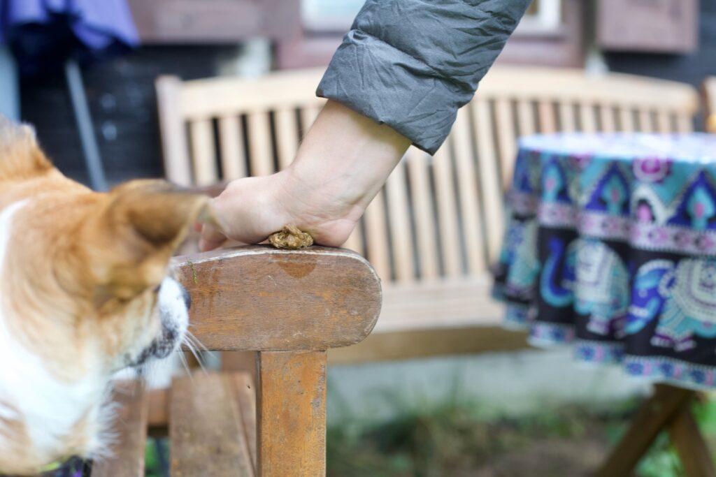 Przysmak dla psa rozgniatany jest dłonią o brzeg krzesła. Obserwuje to mały piesek