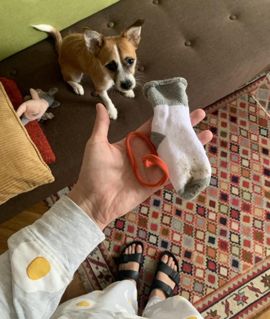 pies siedzi na kanapie i patrzy na dziecięcą skarpetkę trzymaną w ręce opiekunki